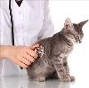 Ветеринарные клиники в Кочкурово